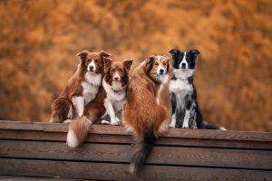 LIMITAREA NUMĂRULUI DE ANIMALE PRINTR-O HOTĂRÂRE DE CONSILIU LOCAL?